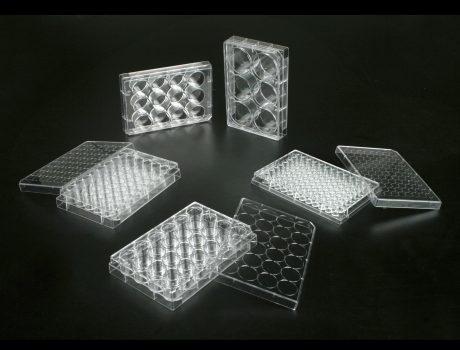 placas-multipocillo-cultivo-celular-jetbio